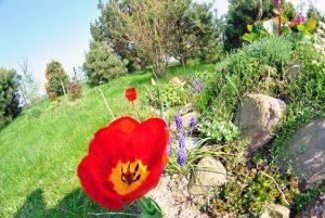 Jak samodzielnie zrobić skalniak w ogrodzie